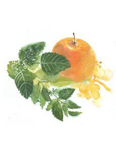 Fruchtkräuter Apfel Melisse